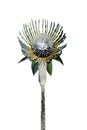 Spiny Stone flower, 4 x 6 inches